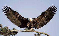 Image result for eagles landing pictures