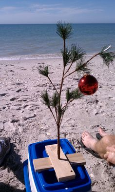Celebrating Christmas in Florida