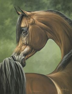 Lovely Arabian horse prints. Horse Artwork, Cool Artwork, Horse Paintings, Pastel Paintings, Arabian Art, Arabian Horses, Horse Face, Lion Art, Amazing Paintings