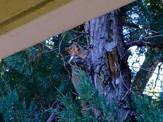 My Squirrel Friend during NYM Camps, June 2017