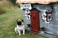 interesting dog house
