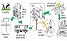 The Process of Milk Production - Sample Writing Task 1 Essay Ielts Writing Task1, In Writing, Number Words Chart, Milk Processing, Pie Graph, Cue Cards, Milk And Cheese, English Writing, Free Blog