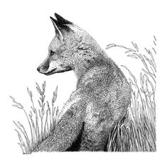 Pencil Drawing Patterns Fox in Grass Pen and Ink Drawing - Based on this photo by Curtis Brandt Ink Pen Drawings, Animal Drawings, Ink Illustrations, Illustration Art, Fox Drawing, Grass Drawing, Stippling Art, Scratchboard Art, Wolf