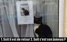 Chat disparu mais encore l�