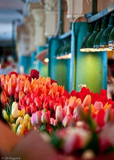 Can't wait to go back to Amsterdam, walk through the market and see tulips everywhere...heaven.