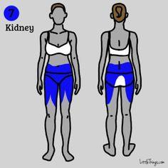 7. Kidney