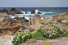 Spring in Pebble Beach California  Here and at Point Joe just down the beach, Chinese immigrant fishermen built lean-tos of drift wood aga...