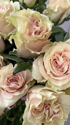 Light Pink Flowers, Beautiful Rose Flowers, Beautiful Flowers, Organic Roses, No Rain, Flowers Online, Flower Market, Floral Arrangements, Wedding Flowers