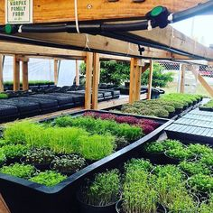 One of the best things in the world are #microgreens this little ones contain tons of #power #nutrition & #flavor and this are also stunning  in #miami we are lucky to have someone who specializes only in growing some amazing varieties.. @harpkefamilyfarm #harpkefamilyfarm support #local #farm check it out @mattyshermmia @nobumiamibeach @chefmschwartz @drigorichardson @lovingreens @chefjuanadames #miamichef #food #ediblegarden #vegan @veganfoodshare by thehouseofv