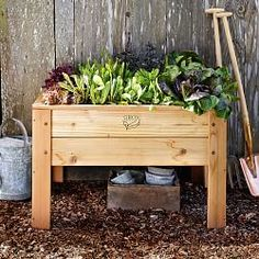 Raised Garden Beds & Planter Boxes | Williams-Sonoma