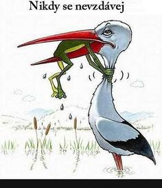 """never give up frog stork"" Frog Quotes, Funny Frogs, Cute Cartoon Animals, Holiday Wishes, Stork, Never Give Up, Jokes, Lol, Humor"
