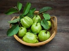 Guava is a sweet fruit with a tangy smell. It is an oval-shaped fruit with light green or yellow skin and contains small edible seeds. The high nutrient content gives guava their innumerable health benefits. The leaves of the guava tree Guava Plant, Guava Fruit, Guava Leaves For Hair, Fruit Rose, Green Fruit, Guava Benefits, Health Benefits, Guava Leaf Tea, Candida Albicans