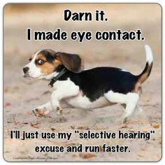 Yep....thats a beagle