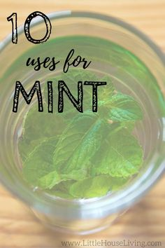 Incredible Uses for Mint Leaves That You Need to Try 10 incredible uses for mint. You need to check out this article if you have an herb incredible uses for mint. You need to check out this article if you have an herb garden! Uses For Mint Leaves, Mint Plant Uses, Mint Leaves Recipe, Drying Mint Leaves, Mint Recipes, Herb Recipes, Recipes With Fresh Mint, Growing Mint, Growing Herbs