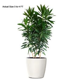 images about buy office plants office foliage office space plants