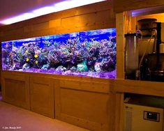 Gorgeous saltwater reef tank!!!