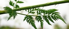 Es ist für die meisten Hochsensiblen eine große Erleichterung, sich als hochsensibel zu erkennen. http://mit-viel-feingefuehl.de