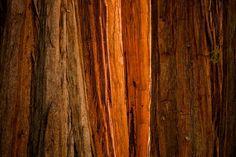 Sequoia Light – Sequoia National Park, California by Thorsten Scheuermann (8 pictures)
