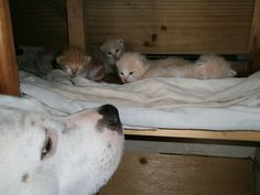 """My """"Nanny"""" dog with his babies.."""