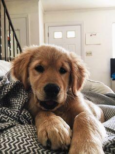 Cute Baby Animals, Animals And Pets, Funny Animals, Cute Puppies, Cute Dogs, Dogs And Puppies, Doggies, Mini Puppies, Corgi Puppies