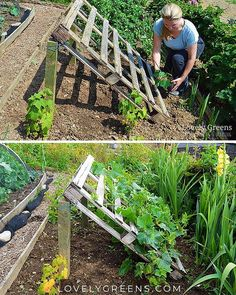 DIY Pallet Cucumber Trellis -- Re-purpose a wood pallet into a quick and sturdy DIY cucumber trellis -- no tools required. It gives space for the plants to grow and makes harvesting an easy task gardening No tools required DIY Pallet Cucumber Trellis Veg Garden, Vegetable Garden Design, Vegetables Garden, Veggie Gardens, Vegetable Gardening, Garden Tools, Easy Garden, Garden Plants, Terrace Garden