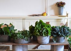 """ediblegardensla:    """"Food, a French man told me once, is the first wealth. Grow it right, and you feel insanely rich, no matter what you own.""""  -Kristin Kimball"""