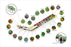 diagram of urban agriculture - Buscar con Google