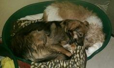 Hunde Foto: Silvia und Dunja und Nelly - Silvia Hier Dein Bild hochladen: http://ichliebehunde.com/hund-des-tages  #hund #hunde #hundebild #hundebilder #dog #dogs #dogfun  #dogpic #dogpictures