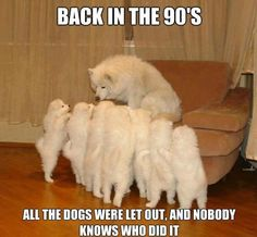 puppy memes - Google Search