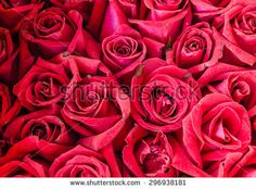 Bunch of rose - stock photo