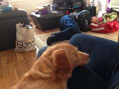 2014 Christmas morning - Lee tried to encourage Keith into his new bed and ended up having a nap himself! Keith came and sat with me instead and napped on my lap xx