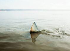 Corey Arnold - Salmon Shark