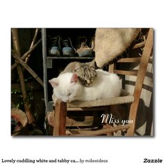 Lovely cuddling white and tabby cats postcard Tabby Cats, Cats And Kittens, Cat Posters, Cuddling, Ladder Decor, Cute Cats, Poster Prints, Postcards, Art