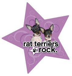 Rat Terriers Rock!