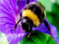 Bee Totem Symbols  ~  Abundance, Productivity, Royalty