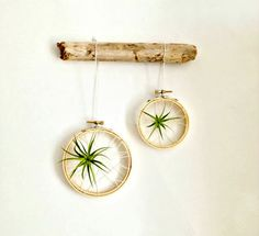 Set/2 Caught in a web air plant on embroidery by omorfigiadesigns