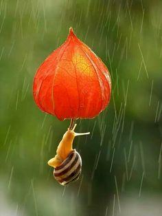 Flying under the rain
