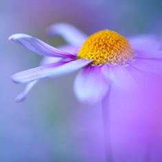dancing - Fine art - flower photography