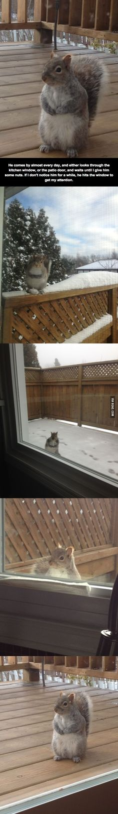 Squirrel who comes every day for nuts.