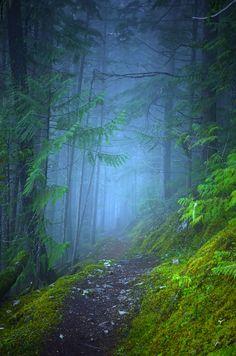 Fog along the Kuskanax Creek Trail in Nakusp, BC Canada