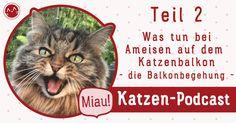 Schädlinge katzenfeundlich bekämpfen https://cat-competence.de/katzen-momente/016-was-tun-bei-ameisen-auf-dem-katzenbalkon-die-balkonbegehung-teil-2/