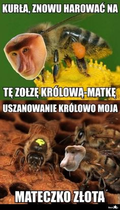 BESTY.pl - Pszczoła, która była Januszem Wtf Funny, Funny Memes, Jokes, Its Time To Stop, Text Memes, Love Memes, Funny Animals, Haha, Humor