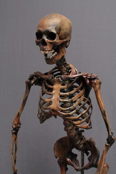 This Lifesize Skeleton Comes With A Seamless Body And Museum Quality Male Skull