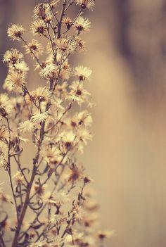Flower Nature Plant  Photography Photo Fine Art  by MundanalRuido, $30.00