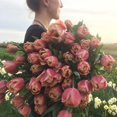 Harvesting armloads of Tulip 'La Belle Epoque' tonight and I'm having trouble breathing because they are so freaking beautiful. #farmerflorist #flowerfarmer #tulips