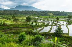 The rice terraces of Karangasem with their awesome misty mountain backdrops. You can view my full blog about this trip into the rice fields here http://createevoke.com.au/balitravelphotography/ #bali #riceterrace #landscapephotography