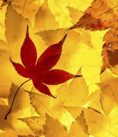 Autumn leaves.  It's so pretty but... It's  fake😣