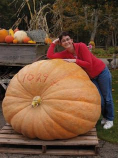 The 'King of all Giant Pumpkins'! Atlantic Giant continues to record stupendous weights in Pumpkin Weigh-Offs across the U. The world record to date is an amazing lb pumpkin grown in Belgium in The Canadian Champion is a lb Pumpkin Garden, Pumpkin Vegetable, Veg Garden, Growing Vegetables, Fruits And Vegetables, Pumpkin Varieties, Biggest Pumpkin, Giant Pumpkin, Squashes