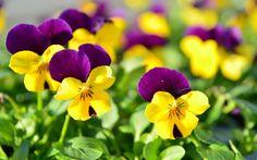 Cuidados de flores bonitas