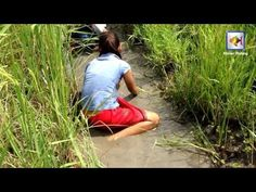 Net Fishing In kampong Cham Province - Khmer Cast Net Fishing - Cambodia...